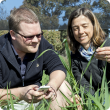 Department of Agriculture and Food development officer Dusty Severtson and plant virologist Brenda Coutts are using smart technology to develop new tools for grain growers to better manage pests and diseases.