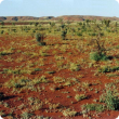 Photograph of a soft spinifex community in good condition