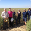 Tactical Break Crop Agronomy Team at Ogilvie Site