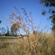 Grader grass