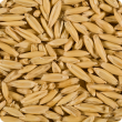 Close-up of plump, bright oat grain.