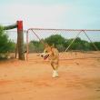 Wild dog near fence