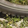 Caltrop under the wheel of a bike