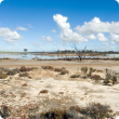Photograph of saltland and salt lake
