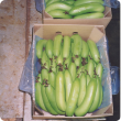 Bananas packed and ready for market.