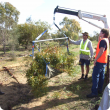 Image depicting three project staff using a truck mounted hydraulic lifting arm to weigh tree branches at the West Three Springs site