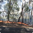 Leaf litter burn near vineyard
