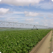 Centre pivot irrigation system watering a potato crop