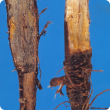 Stem and taproot interior (left) have an ash-grey discolouration
