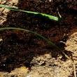 Deep sowing