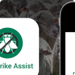 Flystrike Assist home screen