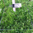 The application of nitrogen can stimulate high growth in grassy pastures in winter.