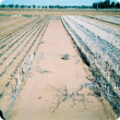 Burnt and standing stubble treatments adjacent to each other