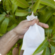 Medfly control weapons in the backyard include bagging fruit to prevent females from stinging them.