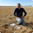 Department research officer Dr Stephen Davies soil sampling at trial site in Mingenew, which has demonstrated long term benefits from a one-off soil inversion treatment with lime incorporation.