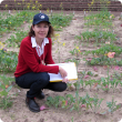 DAFWA development officer Jackie Bucat with a plot of canola at the department's South Perth site, which is part of research to examine the growth cycle of 24 commercial canola varieties to assist growers' selection and crop management decisions.