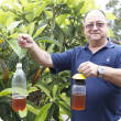 Department of Agriculture and Food senior technical officer Ernie Steiner holds home-made fruit fly traps.