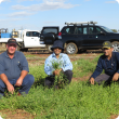 DAFWA technical officer Paul Bartlett (left), principal research officer Dr Abul Hashem and research officer Dr Mohammad Amjad inspect the efficacy of various herbicides on button grass population on Critch family's property, Mullewa.