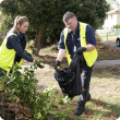 Residents are encouraged to continue the great job they have been doing of removing, treating and disposing of host fruit. Response officers Adeline Blin and Kevin Lacey pictured here disposing of fruit from pruned tree branches in black plastic bags read