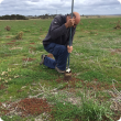 Department of Primary Industries and Regional Development officer Paul Sanford taking paddock samples in late 2017. Researchers will be in paddocks later this month collecting samples with the hope of identifying which plants are hosting a virus linked to