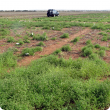 A department summer weed trial on the control of button grass on Critch Family property at Mullewa using a range of herbicides applied alone, as a tank mix or in sequence, during 2015 summer season.