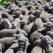 A pen of lambs from a single sire mating.