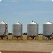Silos filled with grain on a farm.