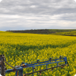 Fungicide spraying canola trials