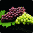 Black background with one bunch of black grapes and one bunch of green grapes on vine leaves.
