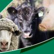 WA Livestock Disease Outlook header