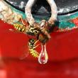 European wasps at water